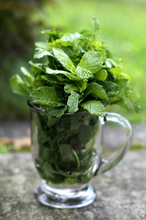 fresh mint recipes